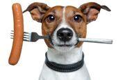 Сколько раз в день надо кормить собаку или кошку?